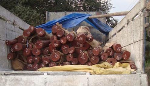 sandalwood-Monggar
