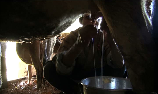 Dairy groups struggling to stay afloat--