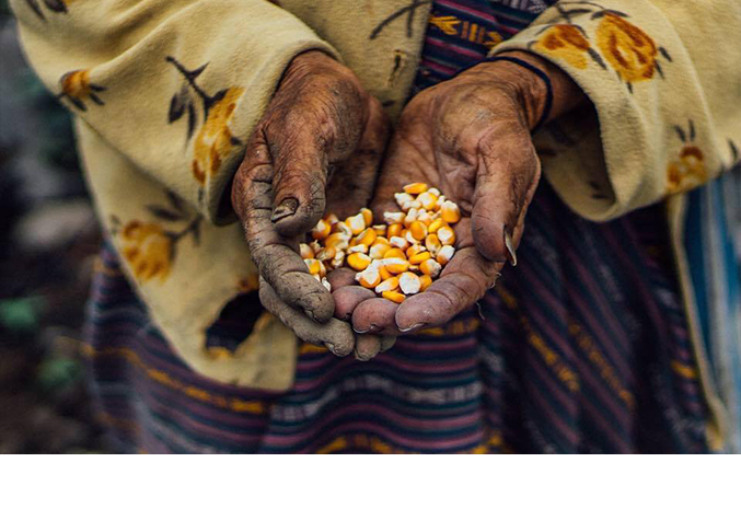 Corn is essential to our lives in Bhutan (Pic: Pawo Choyning Dorji)