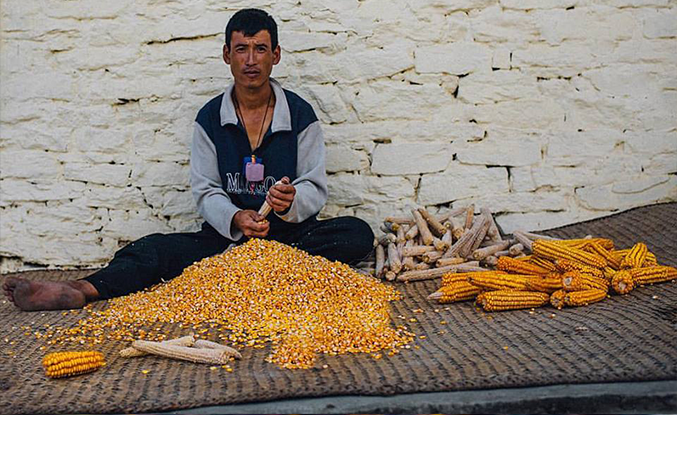 It\'s all about corns in Rongthung, Trashigang (Pic: Pawo Choyning Dorji)