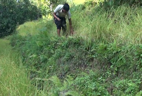 Wild animals damage crops in Tsirang