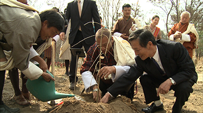 Agriculture ministry receives 12 cherry saplings from Japan--
