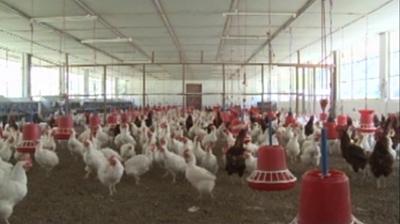 Lingmethang Breeding centre gearing up to meet increasing demand-