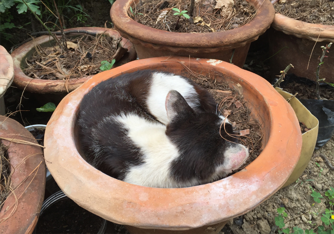 A potted pet needs no manure