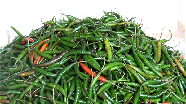 Import of chilies banned-