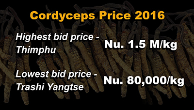Cordyceps collection increases by almost two-fold--