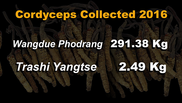 Cordyceps collection increases by almost two-fold
