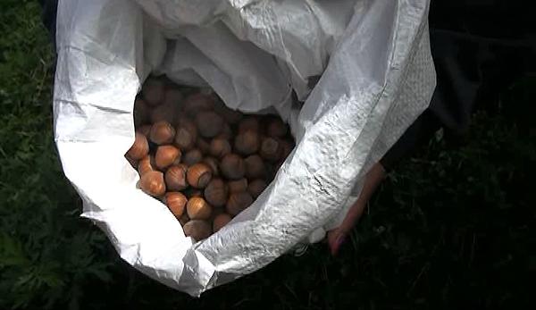bhutan-to-begin-hazelnuts-export-next-year